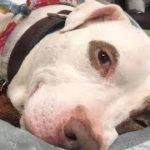動物シェルターに残った最後の犬のため、スタッフは新しい家族を探した。