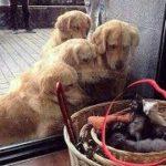 「面白い動物」あり得ないことをする犬, 猫・おもしろ犬, 猫のハプニング, 失敗集 #231