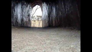 おもしろ犬PV ☆ジュラシック公園