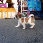 Small Cute dog   Pretty dog  Slow motion play  可愛い犬