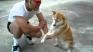 いじめっこ犬