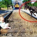 「面白い動物」あり得ないことをする犬, 猫・おもしろ犬, 猫のハプニング, 失敗集 #222
