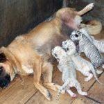 「面白い動物」あり得ないことをする犬, 猫・おもしろ犬, 猫のハプニング, 失敗集 #216