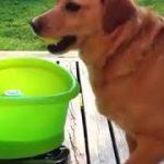 ひとりで取ってこい遊びをしている犬