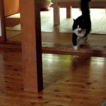 犬のような猫 Cat like a dog