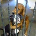 寄り添うあう二匹の犬の写真がSNSに投稿された。二匹には時間がなかった。