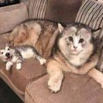 「面白い動物」あり得ないことをする犬, 猫・おもしろ犬, 猫のハプニング, 失敗集 #274