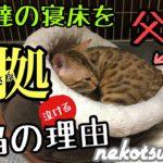 【感動】子猫の寝床を奪った父猫。その本当の理由が泣ける
