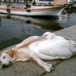 「面白い動物」あり得ないことをする犬, 猫・おもしろ犬, 猫のハプニング, 失敗集 #238