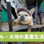 北海道の畑で、みんなを癒すワンコ・大地くん🌞 今日も大地は、おいしい野菜を育てる…ワン……🚜💤【PECO TV】