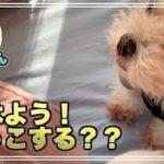 可愛い犬のんちゃん´•ﻌ•` 朝ののんちゃん、抱っこおねだりしてカワイイ。