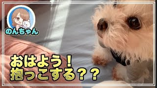 可愛い犬のんちゃん´•ﻌ•`🐾 朝ののんちゃん、抱っこおねだりしてカワイイ。