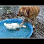 「面白い動物」あり得ないことをする犬, 猫・おもしろ犬, 猫のハプニング, 失敗集 #271