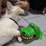 2019「絶対笑う」最高におもしろ犬,猫,動物のハプニング, 失敗画像集 #2
