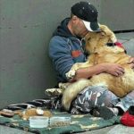 「忠実な犬の感動動画」犬は富める時も貧しき時も飼い主に寄り添っている・必死に飼い主を守る