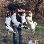 「面白い動物」あり得ないことをする犬, 猫・おもしろ犬, 猫のハプニング, 失敗集 #1