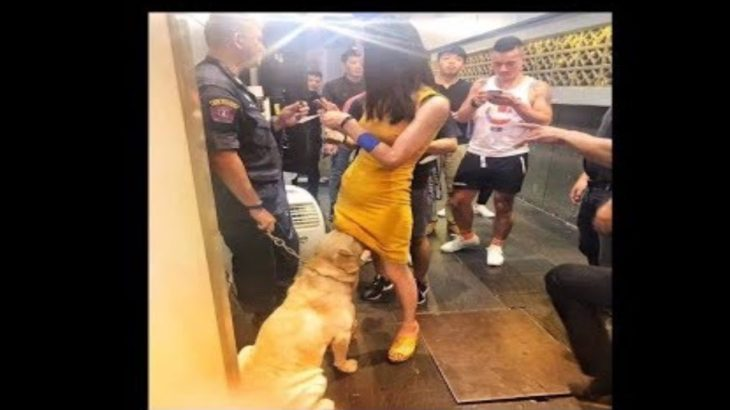 2019「絶対笑う」最高におもしろ犬,猫,動物のハプニング, 失敗画像集 #9
