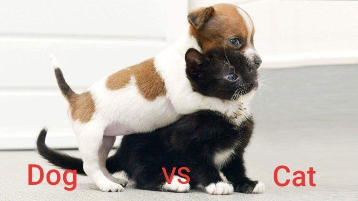 「面白い動物」あり得ないことをする犬, 猫・おもしろ犬, 猫のハプニング, 失敗集 #242