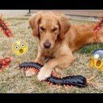 「面白い動物」あり得ないことをする犬, 猫・おもしろ犬, 猫のハプニング, 失敗集 #235