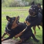 「面白い動物」あり得ないことをする犬, 猫・おもしろ犬, 猫のハプニング, 失敗集 #260