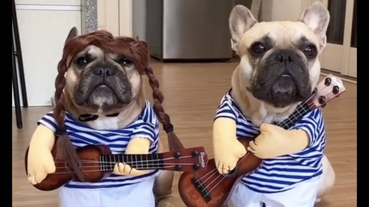 【爆笑】おもしろ犬の笑えるハプニング動画!ドジで可愛いw