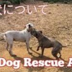 柴犬(しばいぬ)について・・・Dog Rescue A&R