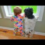 「絶対笑顔」犬と子どもが一緒に育つ。 面白いと超かわいい#2