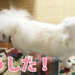 【何かある】犬が珍しく尻尾を振っている!!/[There is something] Dogs are waving their tails unusually! !