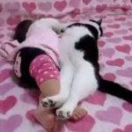 かわいい猫 – 猫おもしろ – 最も面白い猫の動画 2017 #38