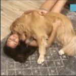 「泣ける動画感動犬」飼い主に寄り添っている犬・必死に飼い主を守る犬・ご主人の1番の理解者は愛犬
