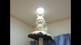 """ペット(猫と犬)に「光」を当てたら、神々しくなって面白くなったw~Pets the """"light"""" in (cats and dogs)."""