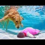 敏感犬のビデオ – レスキュー犬が溺れた | Love Pet TV