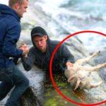 「感動, 尊敬」危険を顧みず、犬, 猫, 動物の命を救ったヒーローの人たち