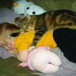「感動」人間の赤ちゃんを必死で守る猫・かわいい猫と赤ちゃん