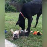 「絶対笑う」最高におもしろ犬, 猫, 動物のハプニング, 失敗動画集・かわいい犬 , 猫, 動物 #5
