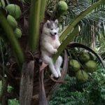 「面白い動物」あり得ないことをする犬, 猫・おもしろ犬, 猫のハプニング, 失敗集 #286