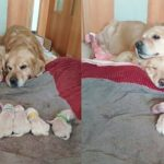 「かわいい犬」子犬をずっと見守る父犬・子犬を必死で守る犬たち