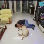 「泣ける動画感動犬」飼い主が倒れた時に犬がどう反応するか?犬の素晴らしいところ見せる動画