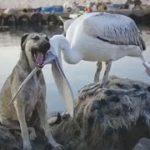 「面白い動物」あり得ないことをする犬, 猫・おもしろ犬, 猫のハプニング, 失敗集 #295