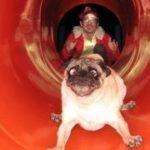 「おもしろ動物」滑り台が大好きな犬, 猫, 動物たち・超かわいい