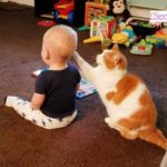 「かわいい赤ちゃんと猫」赤ちゃんとめちゃくちゃ楽しそうに遊ぶ猫・何されても怒らない猫
