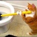 「面白い動物」あり得ないことをする犬, 猫・おもしろ犬, 猫のハプニング, 失敗集 #337