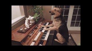 2019「絶対笑う」最高におもしろ犬,猫,動物のハプニング, 失敗画像集 #20