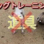 ドッグトレーニングに道具は必要ない!? Dog Rescue A&R