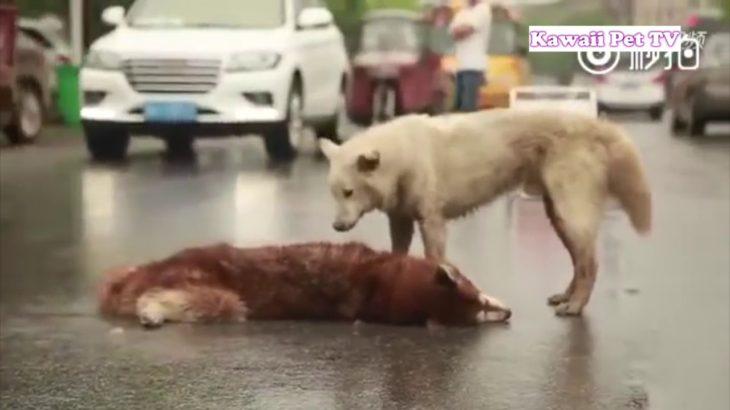 「感動しすぎて泣く」死んだ友人のそばにずっと居たい犬たち・涙が止まらない