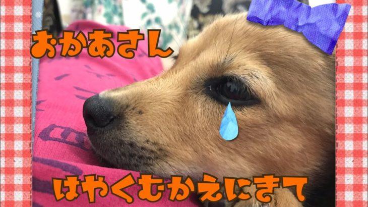 【保護犬】みんなとご対面 びっくりしちゃって・・・あー!!