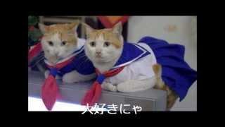 【猫】おもしろネコ動画!!癒し系・オモシロ系~Cat~