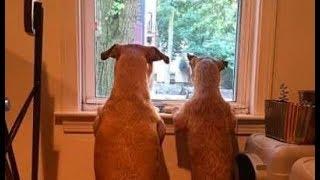 保護施設で偶然見つけた愛犬にそっくりな犬、どうしても助けずにはいられなかった飼い主さん!