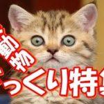 【どうぶつビックリ映像集♪】可愛すぎる動物たち!おもしろ!ハプニング!犬 猫 動物 爆笑 。