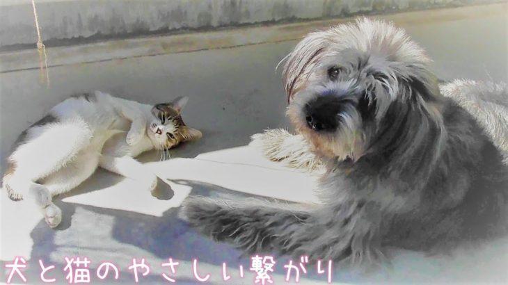 かわいい!犬と猫のやさしい繋がり